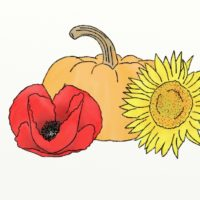 Poppy, sunflower pumpkin